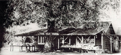 Original Nut Tree Stand